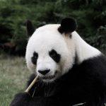 Pandat, huskyt ja vihreät avaimet – Mitkä ovat kestävän matkailun elementtejä?