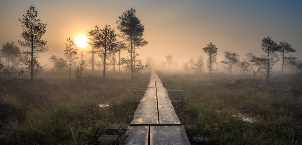 Kuvassa suomalainen suo-maisema, jonka läpäisee pitkospuupolku.